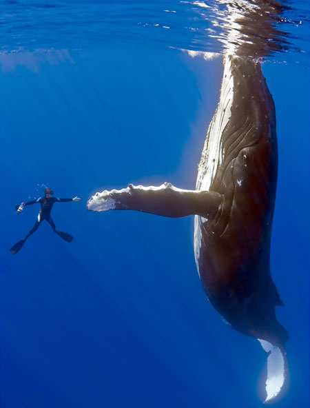 Diver and whale