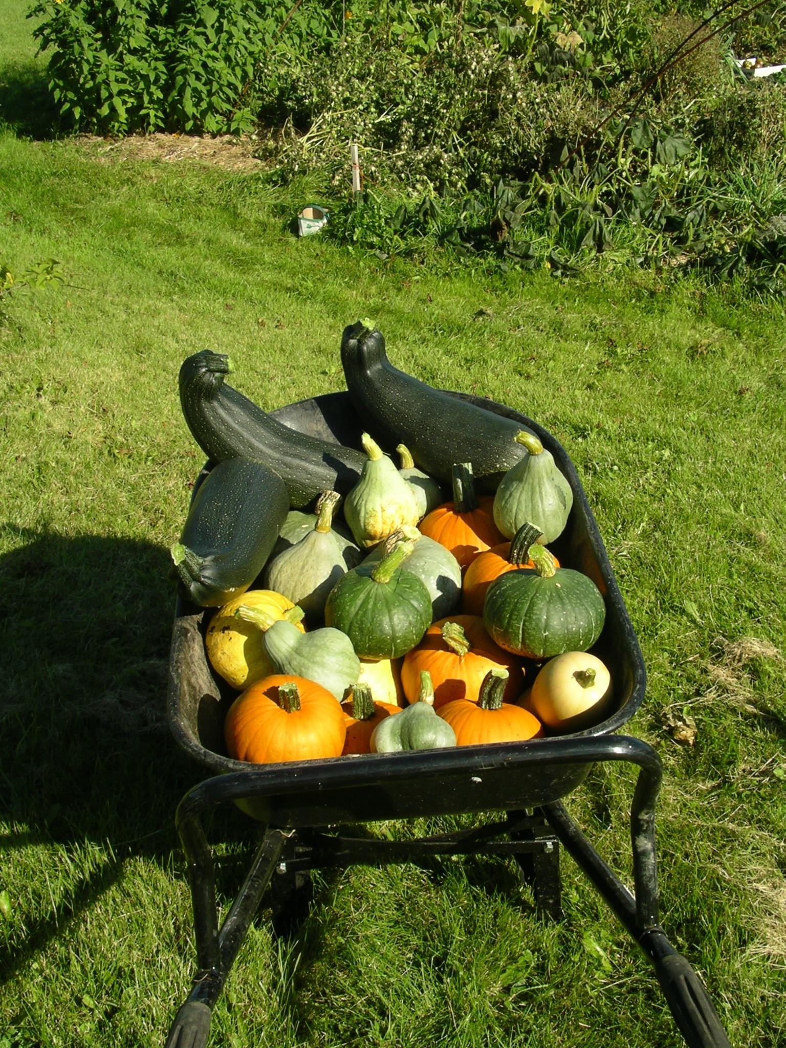 Stéphane's vegetables
