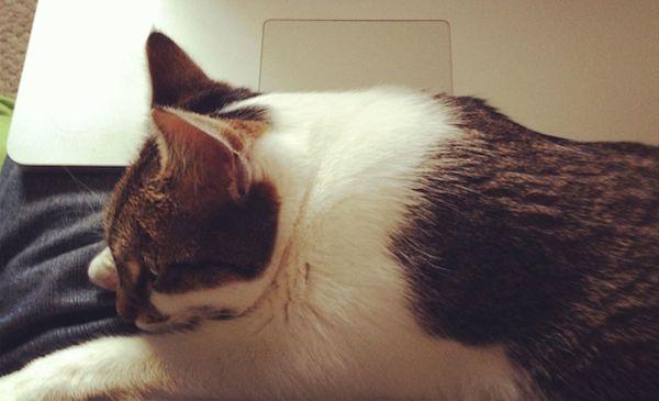 Feist the cat helping me work on T.O.F.U.