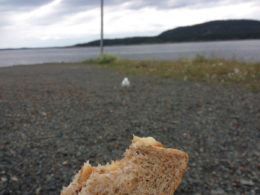 Peanut butter and banana sandwich with seagull in background