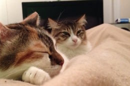 Two sleepy cats