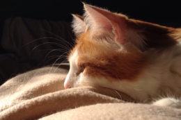 Cat in the sunlight