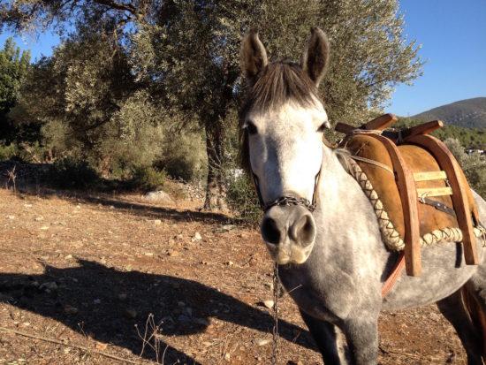 A horse in Kızılağaç, Turkey