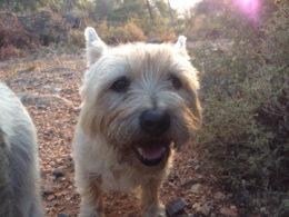 A dog named Jess in Kızılağaç, Turkey