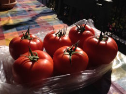 Tomatoes from a local market in Kızılağaç, Turkey